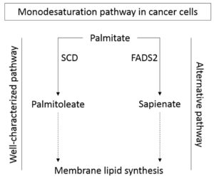 Monosaturation pathway: The EACR's Top 10 Cancer Research Publications